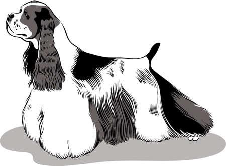 dog breed American cocker spaniel, bad.