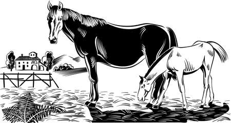 Mare with her foal in a paddock of a farm. Illustration