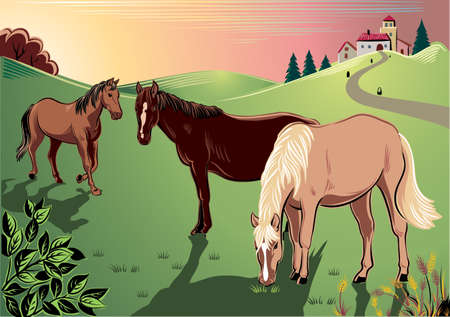 peacefully: Horses peacefully grazing in a meadow.