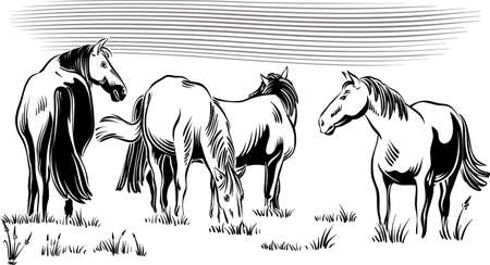 Wild horses in the grazing peacefully. Illustration