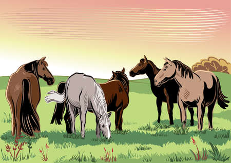 peacefully: Wild horses grazing peacefully.