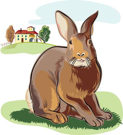 Rabbit in the agricultural landscape. Ilustrace