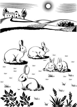 cud: Rabbits and bunnies, on a grass Their chewing cud. Illustration