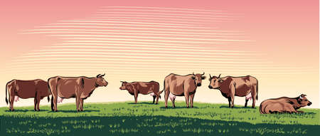 Cows grazing in a meadow. Illustration