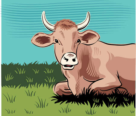 Grazing cow, lying in a meadow while cuding.