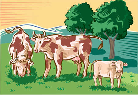 Cows and calf in the pasture. Vector illustration.