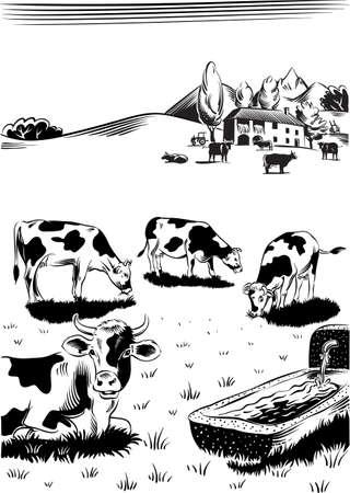 초원 급수 구멍 근처에서 방목하는 소.