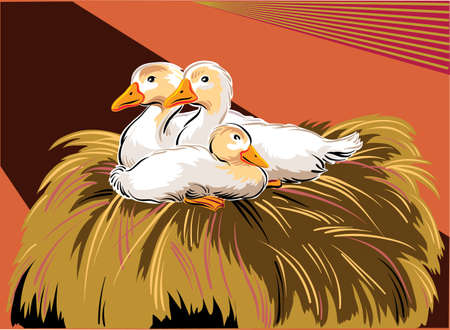 radius: Young geese in a nest on the farm. Illustration