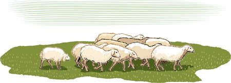 牧草地で羊の群れ。