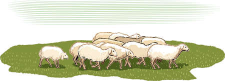 Flock of sheep in a meadow. Illustration