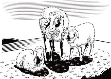 羊と田舎の子羊。  イラスト・ベクター素材