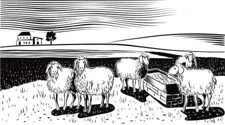 風景の中の散水穴の付近の羊