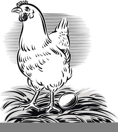 Hen has laid her egg. Illustration