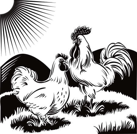 natures: Rooster and hen, scratching in a meadow. Illustration