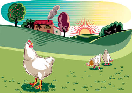 Free hens in a meadow at dawn. Illustration