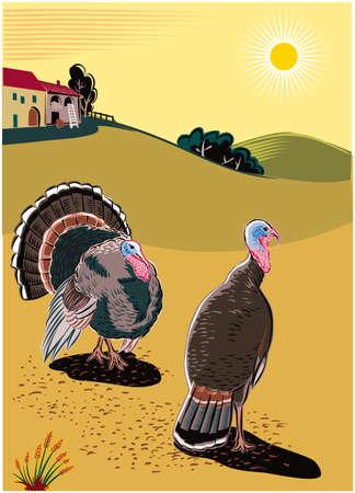 Two turkeys scratching near a farm. Illustration