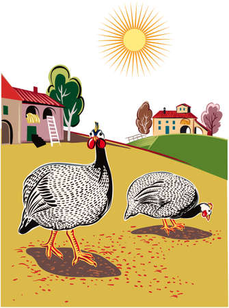 Two pearl-hens pecking in the farmyard.