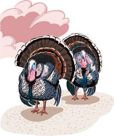 Two male turkeys in a landscape