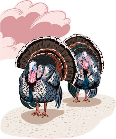 Two male turkeys in a landscape