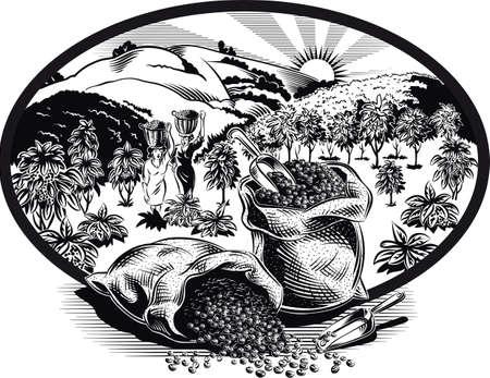 Ovaler Rahmen mit Beutel Kaffee und Pflanzung. Standard-Bild - 84077243