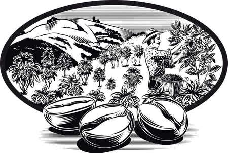 타원형 프레임, 커피 콩 및 농장에 커피 빈. 일러스트