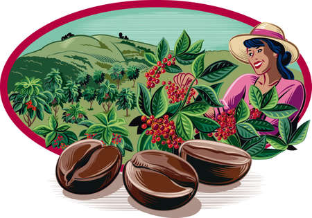 Oval frame, with coffee beans and harvesting of coffee on a plantation. Ilustração