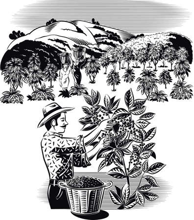 Landschaft mit Kaffee Brieftasche auf einer Plantage. Standard-Bild - 82188021