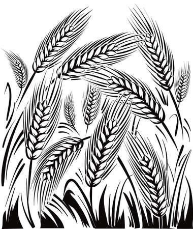 太陽の下の麦畑。 写真素材 - 82401449