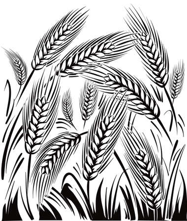 Wheat field, under a sun. Фото со стока - 82401449