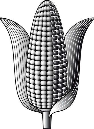 Cob of ripe corn. Фото со стока - 82423598