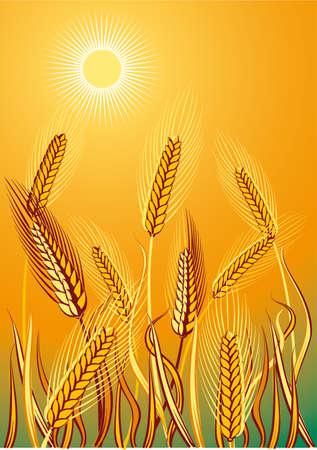 Rural landscape with mature corn ears. Иллюстрация