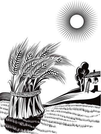 Rural landscape with sheaf of ripe wheat. Vettoriali