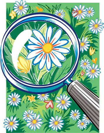 Magnifier highlights a beautiful daisy
