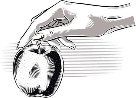 女性手彼は熟したリンゴを保持しています。