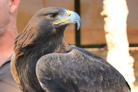 dignified: Eagle