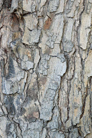 Background bark on a forest tree photo