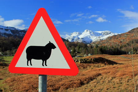 sheep road sign: Road sign for sheep with a backdrop of red and green countryside with snow capped mountains and idyllic blue sky symbolizing farming and the sheer beauty of the countryside