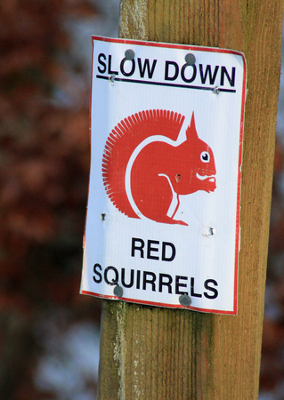 caution sign: Sign on a wooden post stating SLOW DOWN RED SQUIRRELS with a picture of a red squirrel warning drivers that red squirrels are in the area Stock Photo