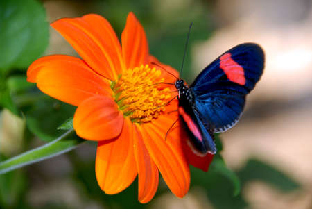 pink butterfly: Orange Flower with Blue pink Butterfly