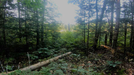 Forest Path Peeking Into Sunny Field Фото со стока