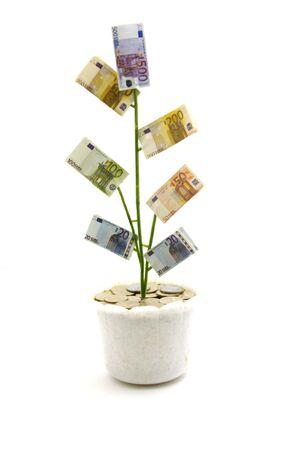 Monetary tree photo