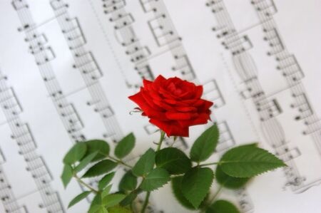 Red rose against notes photo