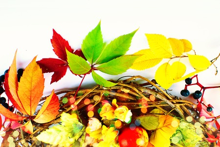 stillife: Autumn Fall - Stillife - Bright Colors - Text Space