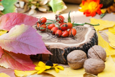 briar: Autumn Background with Natural Elements - Countryside Garden Harvest