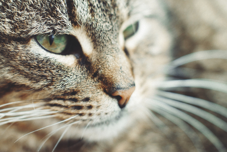 Beautiful Tabby Cat with Green Eyes