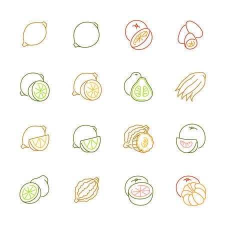 Citrus fruits icon set.
