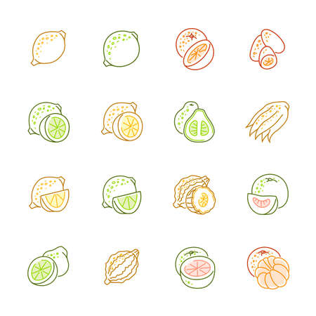Citrus fruits icon set.