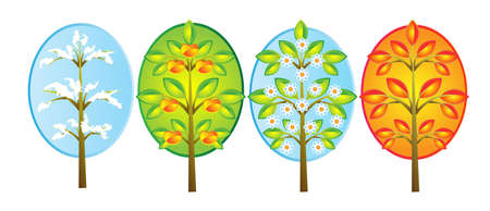 trees in different seasons of the year Vector