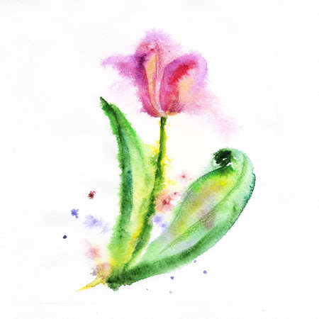 red tulip on a white background painted in watercolor photo