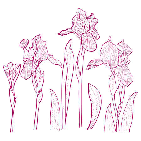 Irises painted hands, line art. Vector illustration